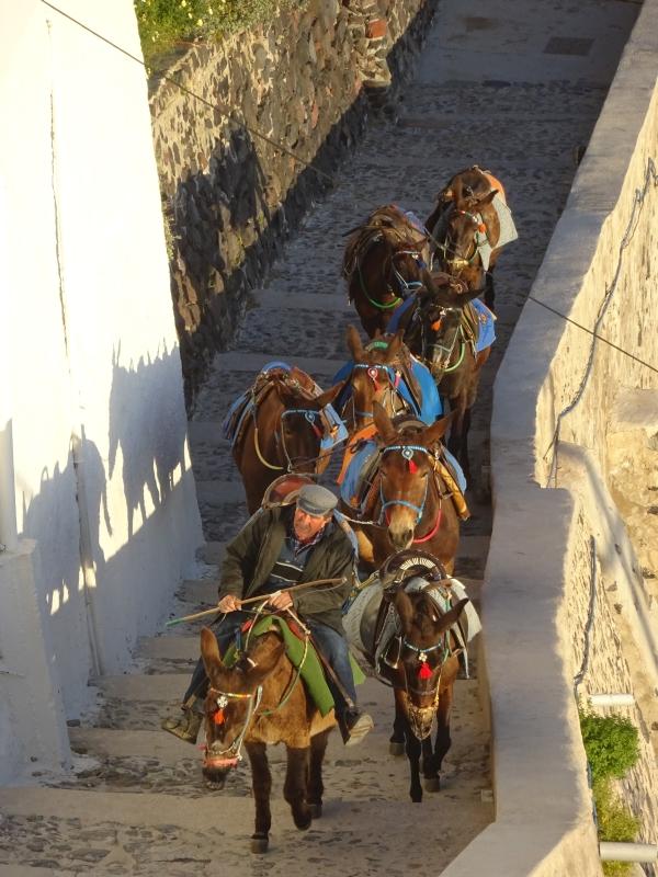 Eseln auf Santorin