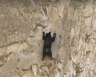 Kletterkurs für Schwarzbären