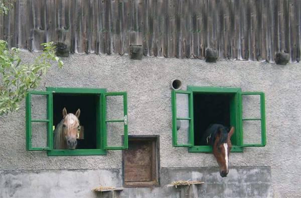 Pferderaststation