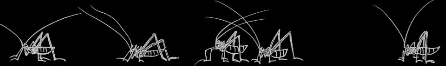 Heuschrecken Flötenkrötenkonzert